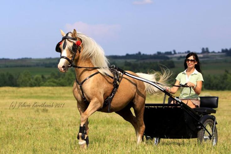 Welsh pony. Had 3 or 4 pony carts. The first was a Christmas present.