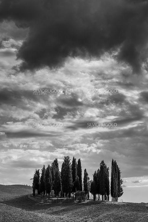 Bosco di Cipressi | Silvio Rugolo Fine Art Photography