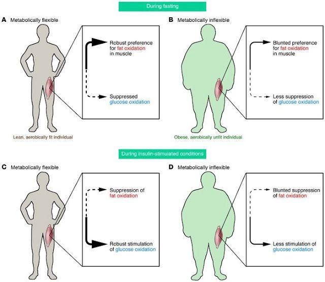 Метаболическая гибкость: фитнес для Вашего обмена веществ