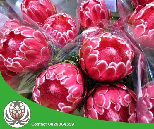 Did you know that you can purchase a variety of Protea flowers which can be delivered anywhere in South Africa from #BofbergFlowers? Contact us directly today for all your #bouquet #flowers