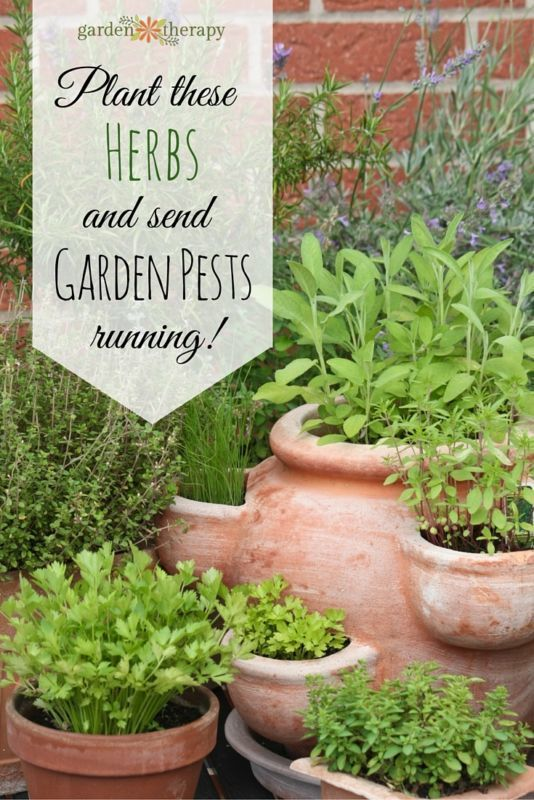 A list of 9 herbs to plant in the vegetable and flower gardens to repel ants, moths, beetles, mites and more naturally and organically - no sprays! Just the power of plants.