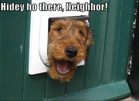 17 best Airedales images on Pinterest | Airedale terrier, Color ...