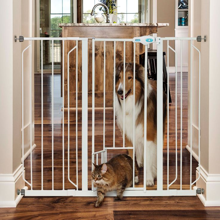 Best 25 Extra Tall Pet Gate Ideas On Pinterest