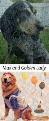Teaching An Old Cook New Tricks: Max And Golden Lady