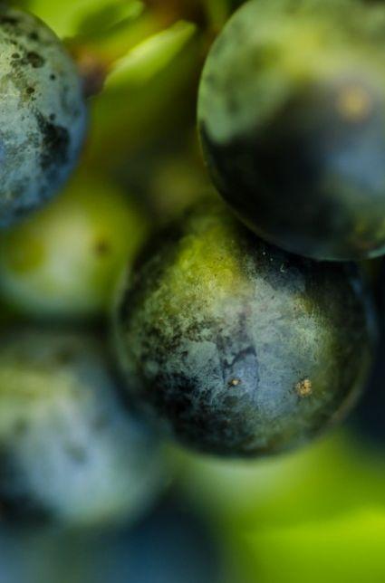 Une amitié qui porte fruit au Vignoble Val Caudalies - Le Garde-Manger du Québec Val Caudalies vignoble et cidrerie dans la région de Dunham! Très bel arrêt pour déguster de magnifiques produits dont le Vidal, un vin blanc très floral et délicieux! #Dunham #Montérégie #Gardemangerqc