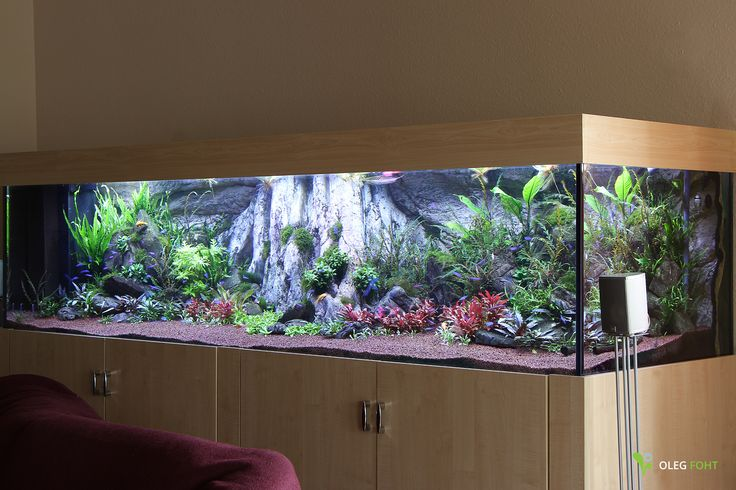 2,5 m Diskusbecken, Kundenprojekt Update nach 3 Monaten. (Aquarium for discus fish.)