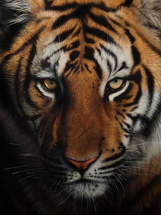 Acrylic, Tiger painting by Cristina #wild animals| http://best-wild-animal-collections.blogspot.com