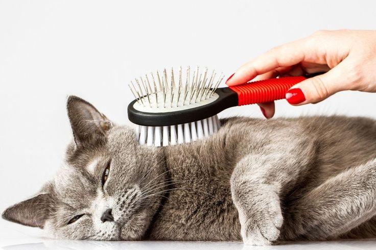 ВСЕ ПРО КОШЕК: Уход за кошками – забота о здоровье.
