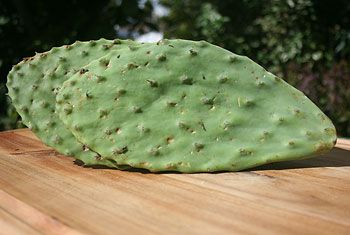"""Cactus Leaves are used in Mexican and Latin American cooking, but only leaves from one kind of cactus: the Prickly Pear Cactus, the same one that produces the Prickly Pear fruit. Some other species of cactus are poisonous, so don't decide to start munching on just any old dusty cactus in your windowsill. The Mexicans call this cactus the """"nopal.""""   The leaves taste a bit like green bell pepper, asparagus and runner beans or green beans, with a bit of tartness to the taste."""