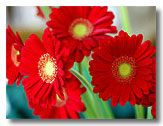 free red flower pictures