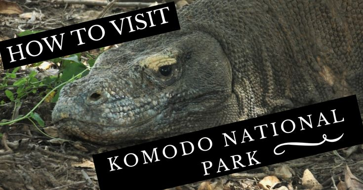 How to visit Komodo national park, including transport, tours, accommodation, and eating. Everything you need to visit the Komodo dragons in Labuan Bajo.