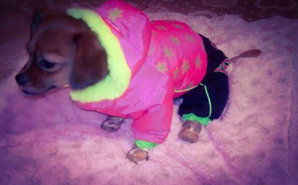 Shasta, frumoasa si dragalasa in Salopeta de Iarna de la King Maru --> https://kingmaru.ro/  #hainecaini #accesoriicaini #imbracamintecaini #caine #caini #catel #catei #dog #dogs #kingmaru