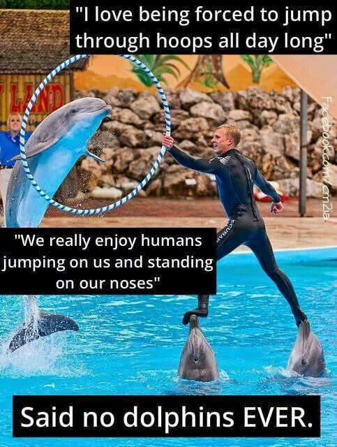 360 best images about end whale dolphin captivity on for Lifespan of a betta fish in captivity