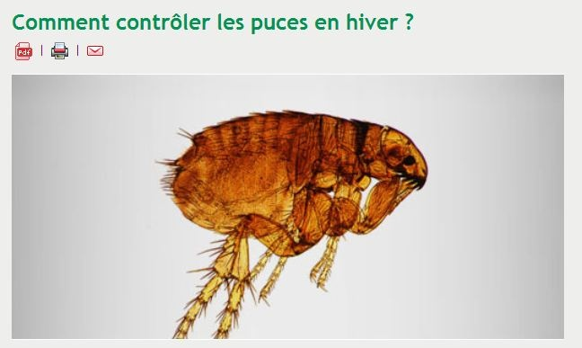 48 best pest control blog images on pinterest bed bugs pest control and 3 4 beds. Black Bedroom Furniture Sets. Home Design Ideas