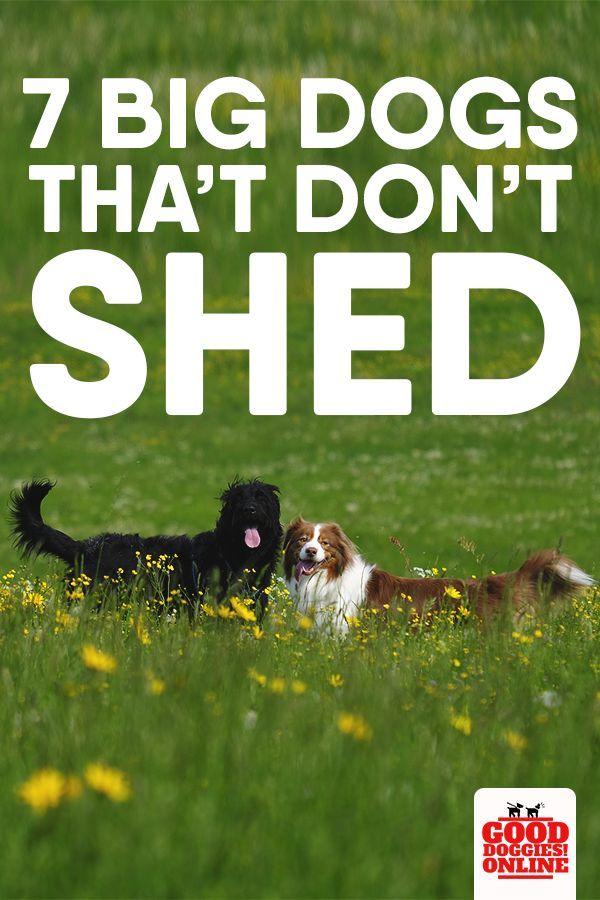 Large Dog Breeds That Don T Shed Dog Breeds Big Dogs Big Dog