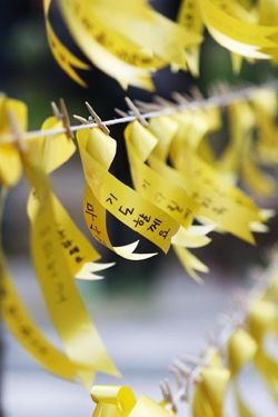 The yellow ribbons tied now in memory of Sewol ferry victims. The disaster is definitely caused by human carelessness.