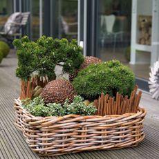 Elegant Winterpflanzen f r Balkon und Terrasse