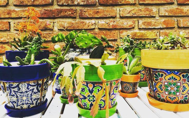 #MundoKuera  Kuera Verbenas: Un poco de estilo para tus cactus...