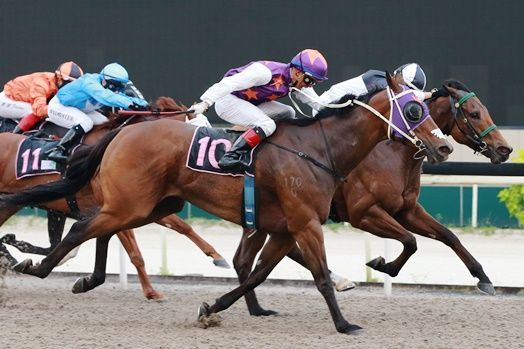 Judges cannot split Super Winner and Laser Storm : Singapore Racing Horse…