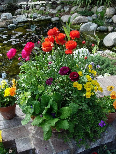 Container garden with spring blooms