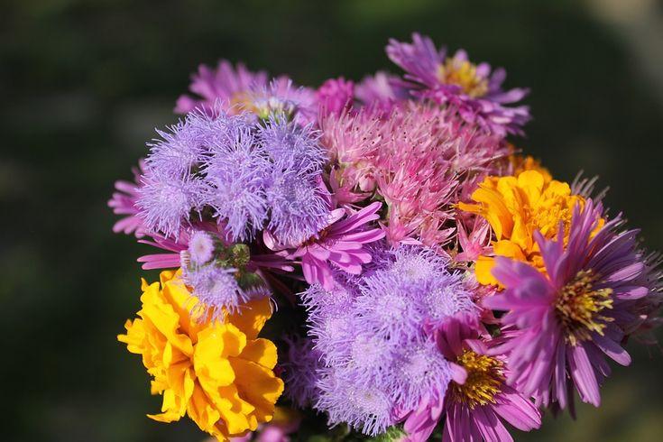 Purpurowy, Kwiat, Purpurowe Kwiaty, Roślin