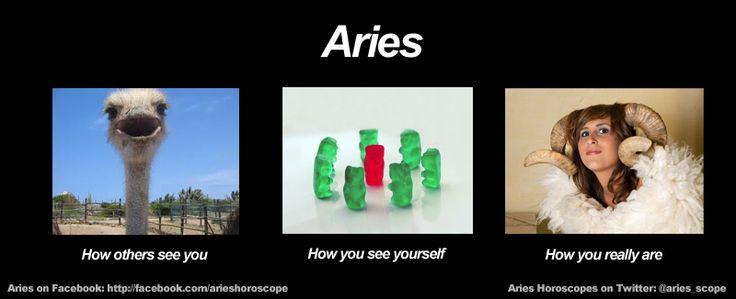 Funny Astrological Memes : Funny aries meme zodiac memes pinterest haha