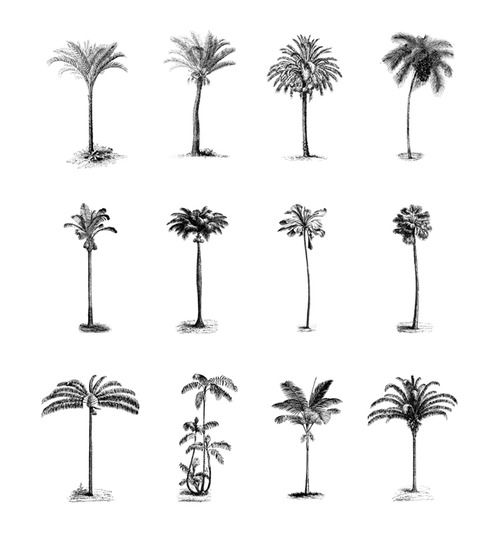 Pretty botanical prints.