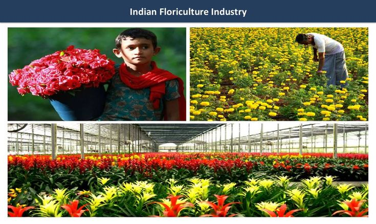 Why the Indian Flower Industry is Attracting Attention from Investors