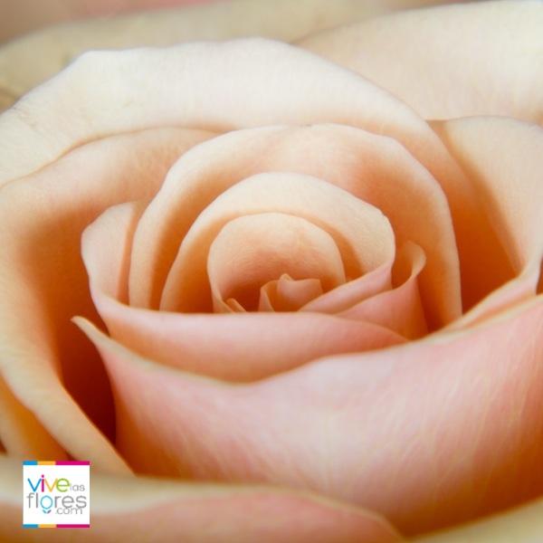 Modestia, Pureza e Inocencia; Virtudes que  puedes celebrar al enviar flores color durazno de vivelasflores.com