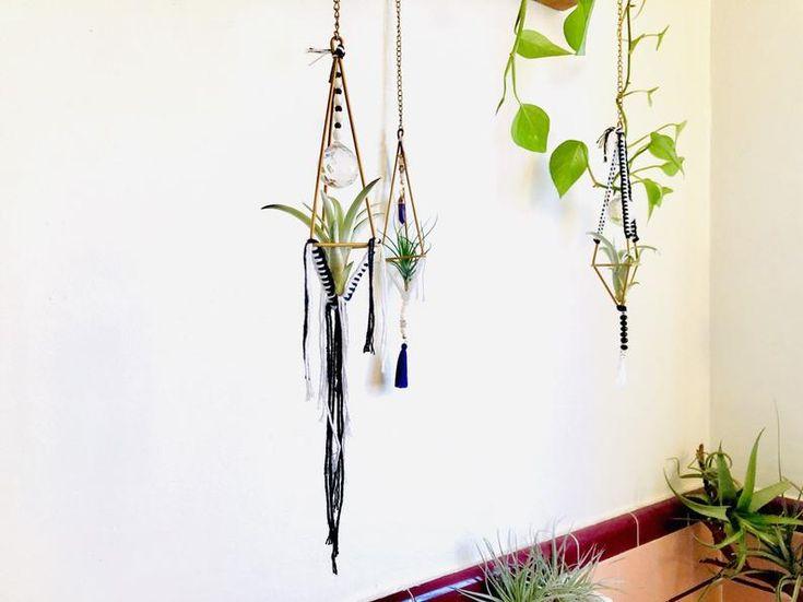 Hanging air plant display · black + white terrarium