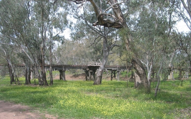 Railway trestle over flood-plain near Warren, NSW.