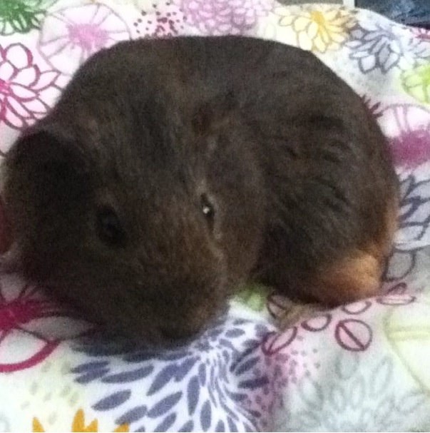 Sandy curled up in a ball