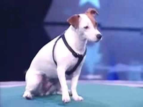 Pet Dog Training Tips Tricks Free
