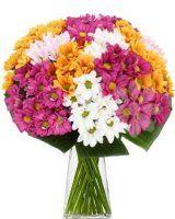 chryzanthmy  - květiny online