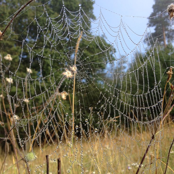 Spindelnät en dimmig morgon.