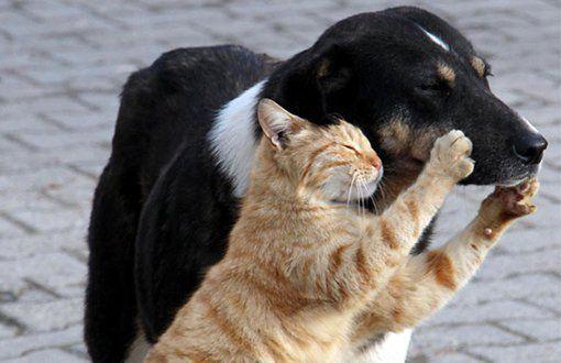 Hayvan hakları örgütleri Bakanlık'taydı: Sokak hayvanlarına dokunmayın!