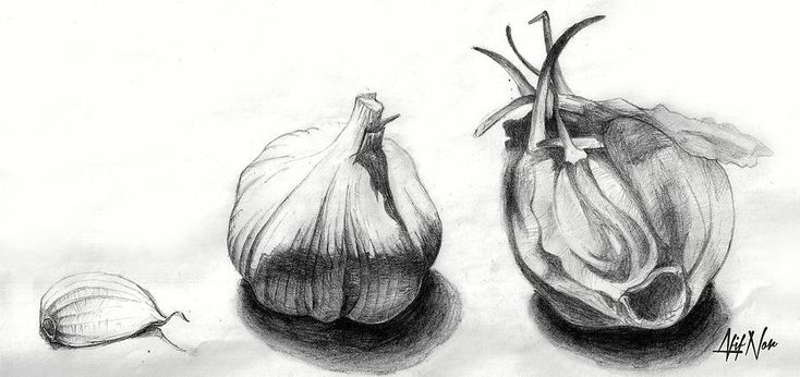 -garlic-drawing-afif-nor.jpg (900×424)