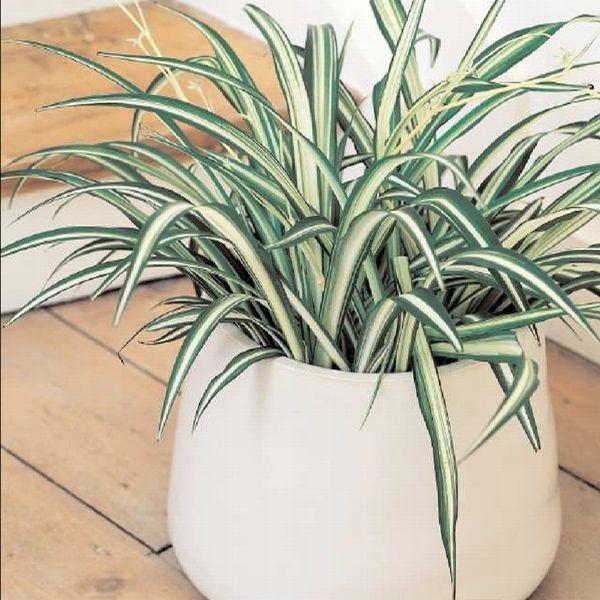 Moje Idealia Blog Lifestylowy Diy Wnetrza Ciaza I Macierzynstwo Uroda Kuchnia Rosliny Doniczkowe Ktore Oczyszczaja Powietrze W Domu Idealne Dla Alerg House Plants Plants Flowers