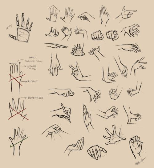 Hands Reference 1 by ninjatic on Deviantart. Click through for part 2 and one on feet as well!Source