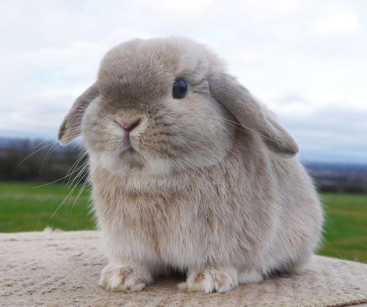 35 best Bunnies images on Pinterest | Baby bunnies ...
