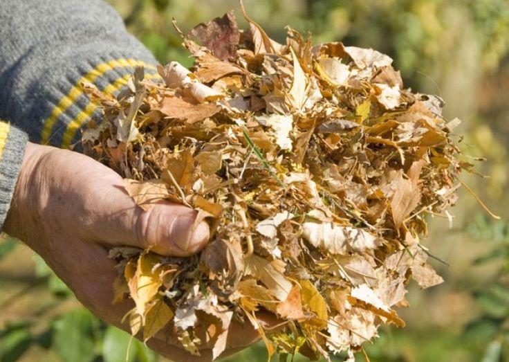 Les 25 meilleures id es de la cat gorie feuilles mortes - Comment utiliser le crottin de cheval au jardin ...