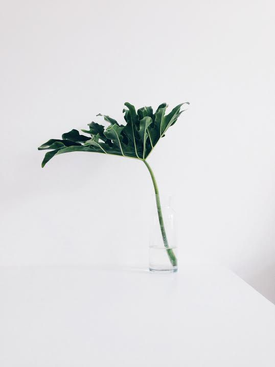 green leaf | Monstera