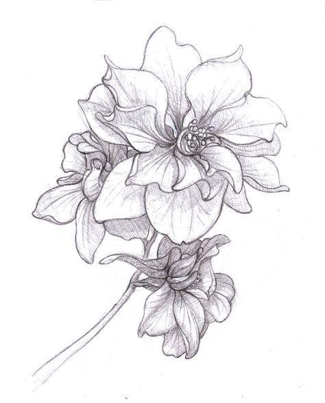 8c5ee3664b8668f0652ed5b0302257e0--larkspur-drawing-larkspur-flower-tattoo.jpg (474×589)