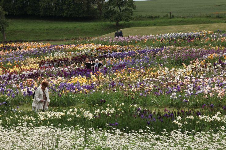 Les visiteurs de nos Jardins en train d'admirer nos 400 (et plus) variétés d'iris (2010)