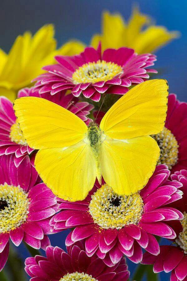 Rarity to a yellow butterfly.