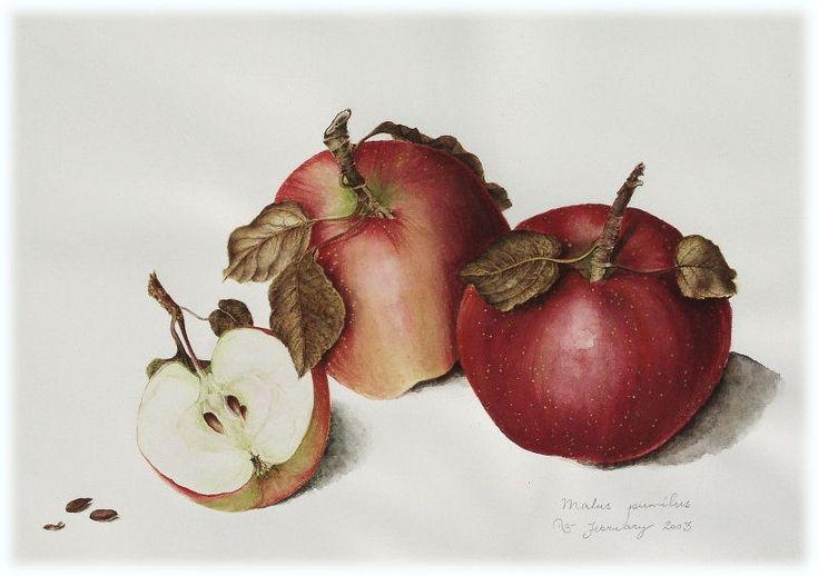 яблоки картинки для декупажа сорт