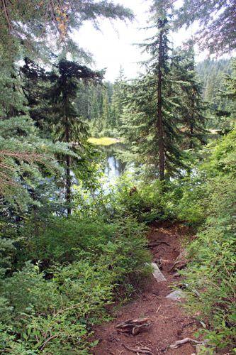A view on Goldie Lake through the trees, Mount Seymour