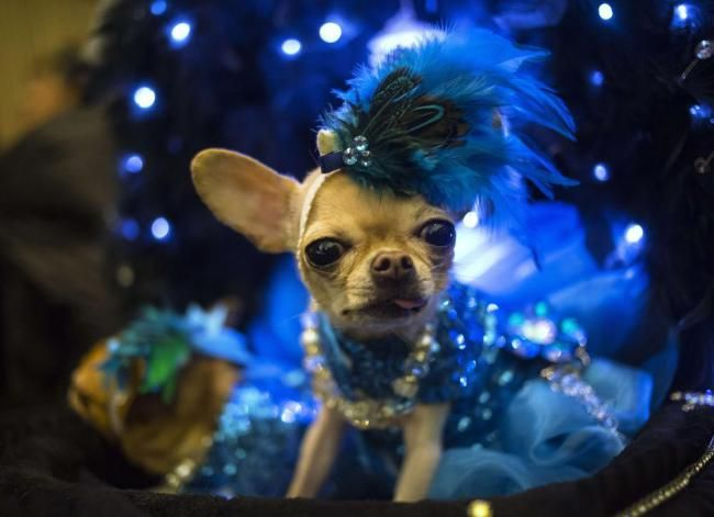 Dogwalk not catwalk at pet fashion show