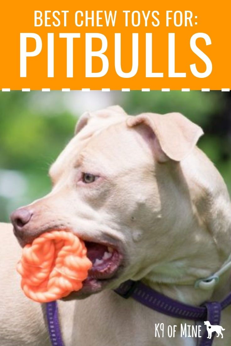5 Best Chew Toys For Pit Bulls 2020 Tough Toys For Powerful