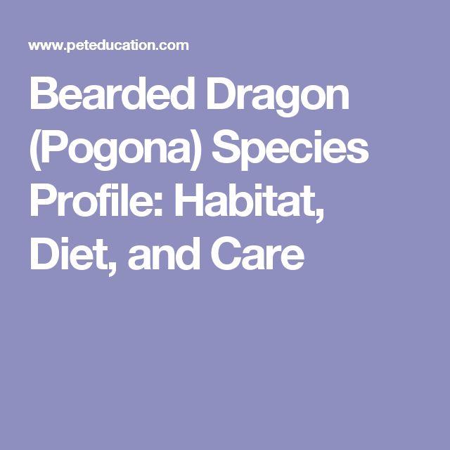 Bearded Dragon (Pogona) Species Profile: Habitat, Diet, and Care